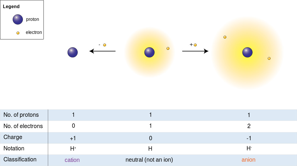 Hydrogen ions: cation and anion